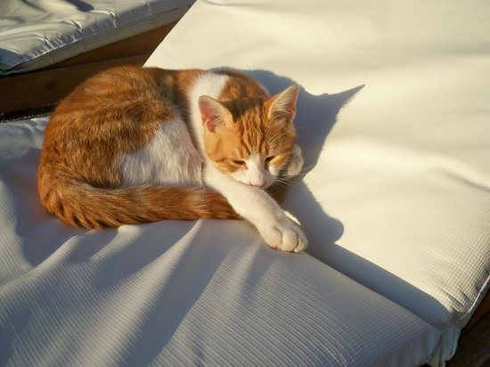 Amathus Beach Hotel Rhodes: One of the frendly hotel cats