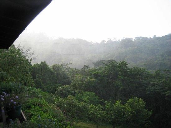 Monteverde Cloud Forest Lodge : Morning mist