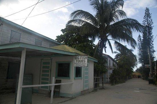 Big Fish Dive Center: Big Fish Tour caye caulker Belize
