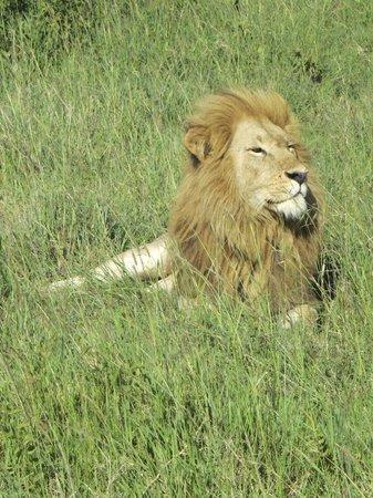 Mara Serena Safari Lodge: Handsome chap seen on our last drive