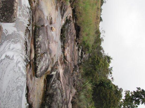 Campamento Chivaton : Quebrada al lado del hotel  agua de la sabana