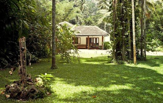 Clove Garden Kandy City : Lovely garden