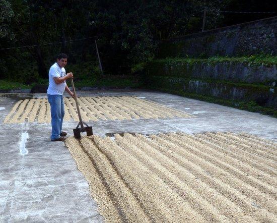 Finca Magdalena : Coffee beans