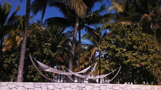 Grand Lucayan, Bahamas: Hammocks on the water