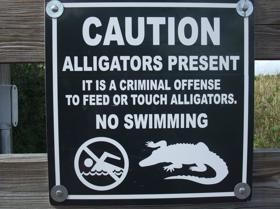 Bahama Bay Resort Orlando by Wyndham Vacation Rentals: Turtles and humans beware
