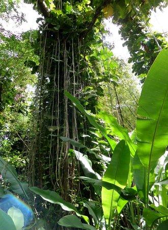 Villa Pomme d'Amour: Visite du Jardin Botanique