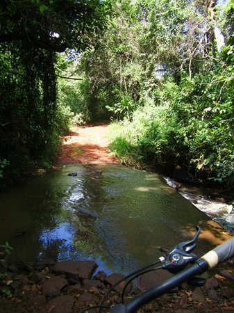 Karura Forest: There was a long climb up after that turn.