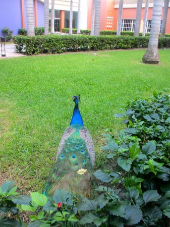 Iberostar Paraiso Maya : Lovely wildlife