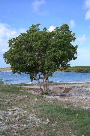 Santa Barbara Beach & Golf Resort, Curacao : Каменистая часть берега
