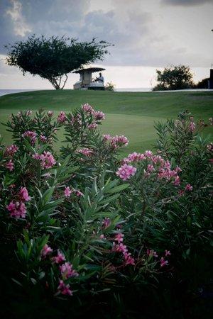 Santa Barbara Beach & Golf Resort, Curacao : По пути на ужин