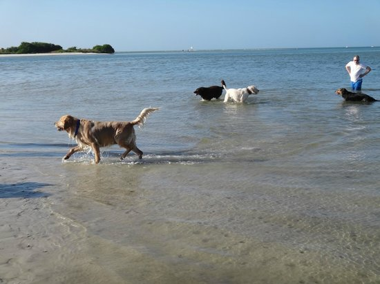 Dog Beach: Nice shallow beach -perfect for the dogs