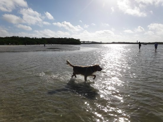 Dog Beach: Just loving the water!