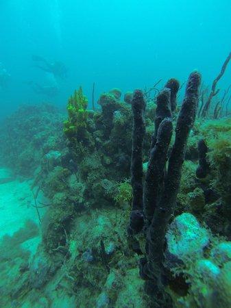 Dive St. Kitts: Christmas Diving