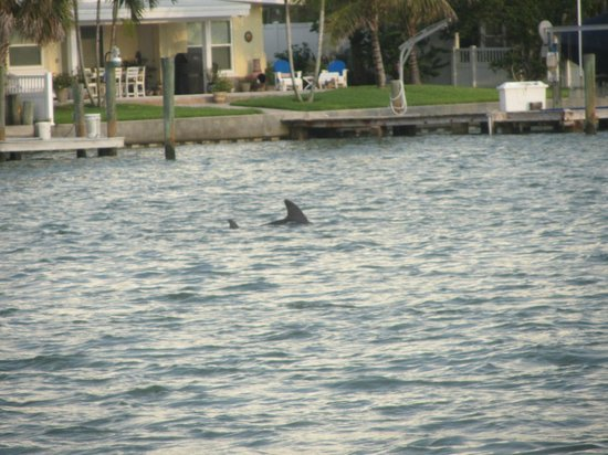 Whispers Resort at Treasure Island: One of the 2 dolphins that came by to entertain us