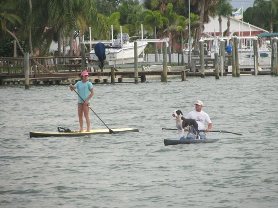 Whispers Resort at Treasure Island: Paddleboarders with their dolphindog!
