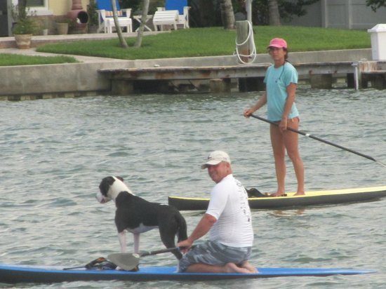 Whispers Resort at Treasure Island: Paddleboarders looking for their dogs (dolphin) playmates!