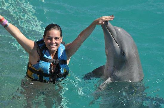 Dolphin Discovery Isla Mujeres: Dolphin Discovery