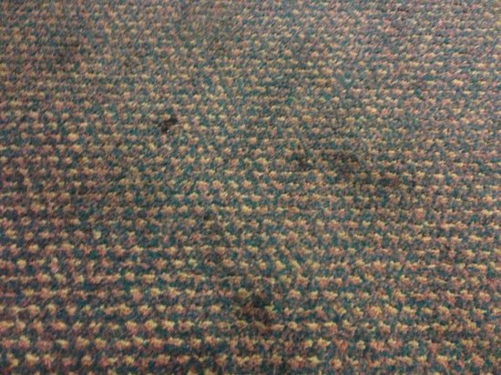 Tropical Palms Resort and Campground: Dirty carpet