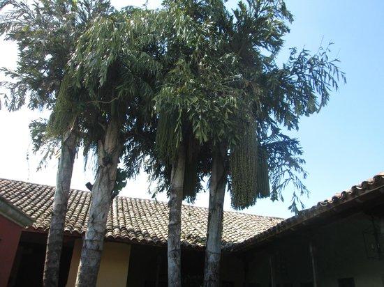 Hotel Casa Robleto : central garden