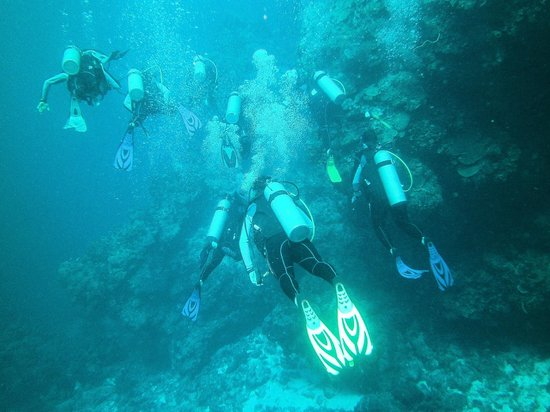 Dressel Divers: DIVERS LEAD THE WAY IN THE BLUE SEA
