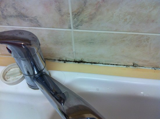 Regal Apartments : Mould behind sink in grout