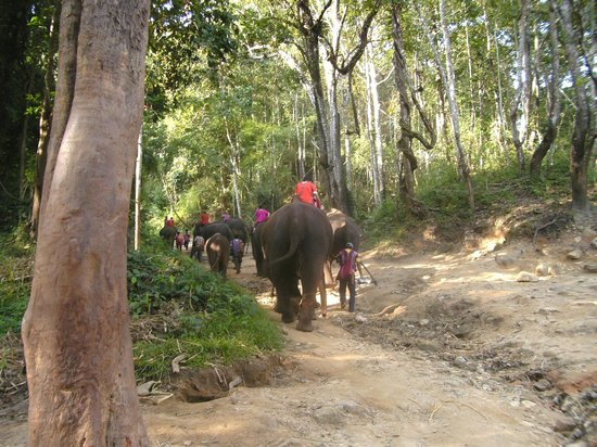 Royal Bella Vista Country Club at Chiang Mai: Elephants and mahouts returning from their bath