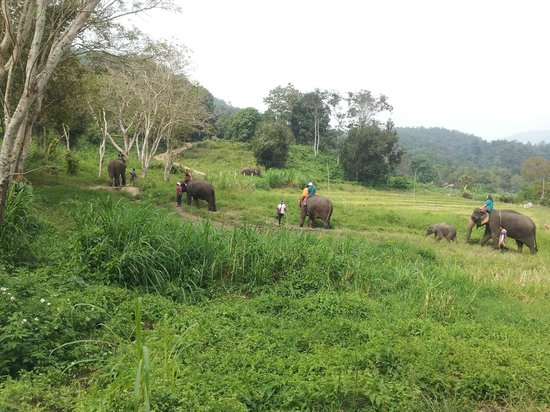Royal Bella Vista Country Club at Chiang Mai: Elephant park around the corner