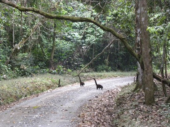 Bosque del Cabo Rainforest Lodge: Lots of wildlife