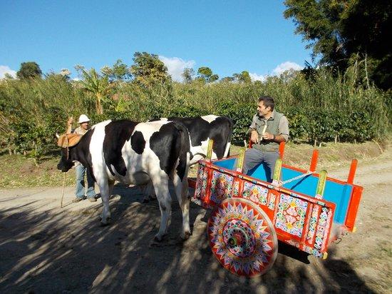 Don Juan Coffee Tour : Ox cart