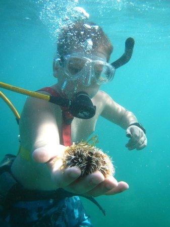 Snuba Saint Lucia: My son holds an urchin.