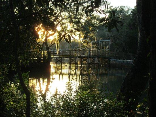 Ellie Schiller Homosassa Springs Wildlife State Park: Pretty