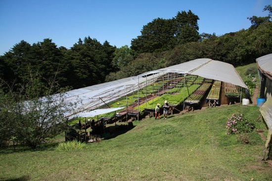 Los Pinos - Cabanas y Jardines: Greenhouse at SE of grounds