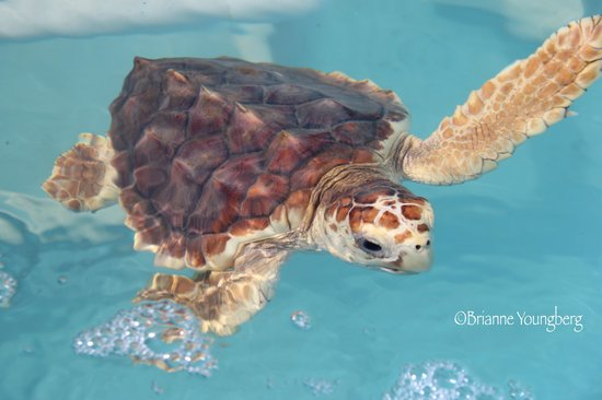 The Turtle Hospital: Zippy