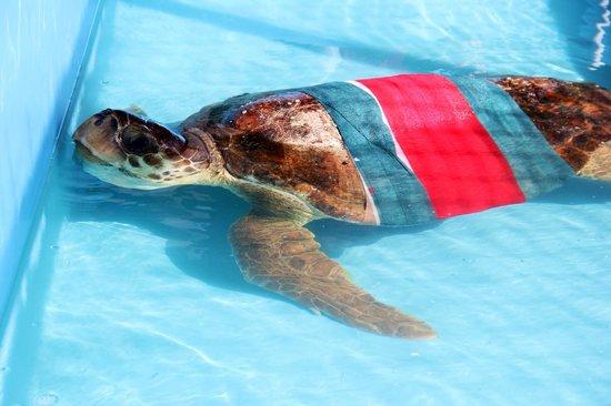 The Turtle Hospital: RIP Brett