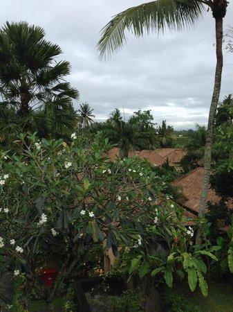 Furama Villas & Spa Ubud: view