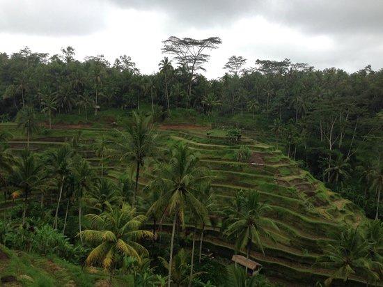 Furama Villas & Spa Ubud : near the hotel