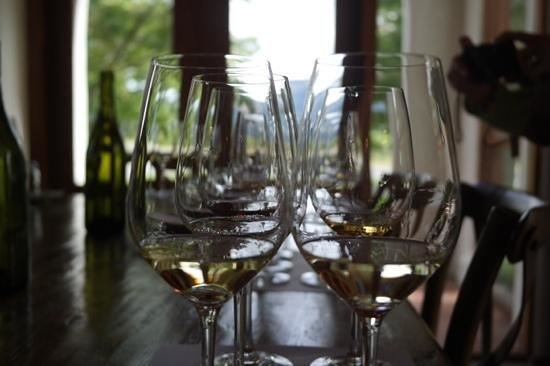 Marlborough Wine Tours : Giesen Cellar Door