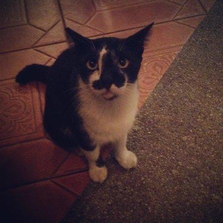 La Sal at Casa Del Mar : Hotel Cat