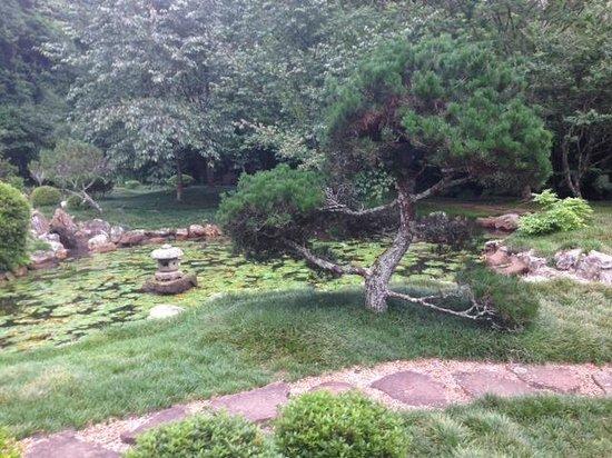 Makaranga Lodge : Japanese garden
