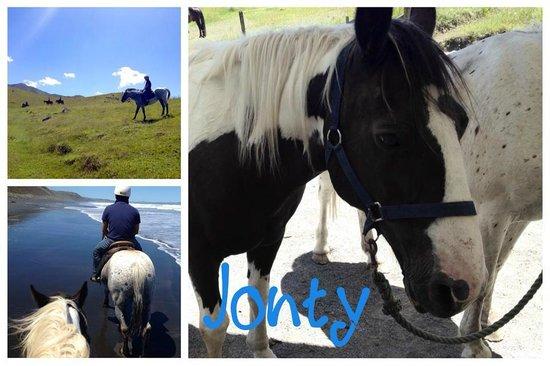 Wildcoast Ruapuke Horse Riding: Jonty the horse