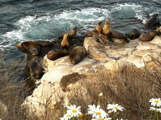 Coastal San Diego Tours to La Jolla & Torrey Pines with TourGuideTim : Sea Life