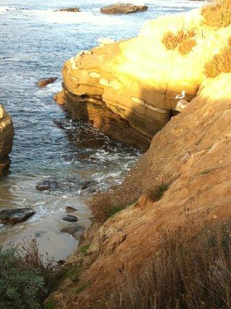 Coastal San Diego Tours to La Jolla & Torrey Pines with TourGuideTim : Wild Life
