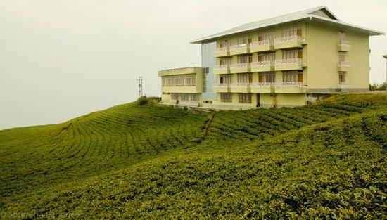 Cherry Resort: Temi Tea Estate