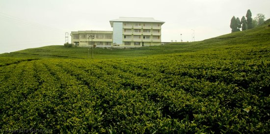 Cherry Resort, Temi Tea Estate
