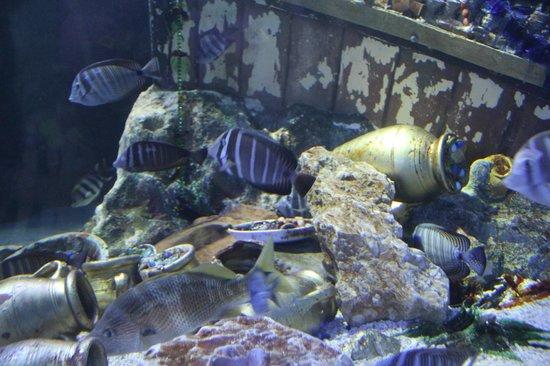 uova di squalo - Picture of Gardaland SEA LIFE Aquarium, Castelnuovo ...