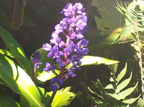 Santa Elena Skywalk : Fleur