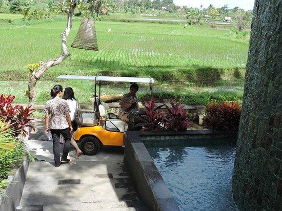 Ubud Padi Villas: the Buggy