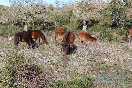 Sardinia Dream Tour - Day Tour : Cavallini della Giara