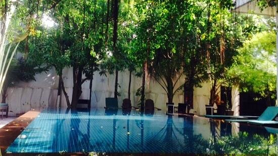 Circa 51 : the pool is divine and the large day bed is fabulous for relaxing after a day out and about in p