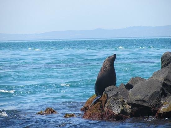 South Bay Eco Adventures: Seal